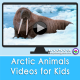 Arctic Animal Videos for Kids