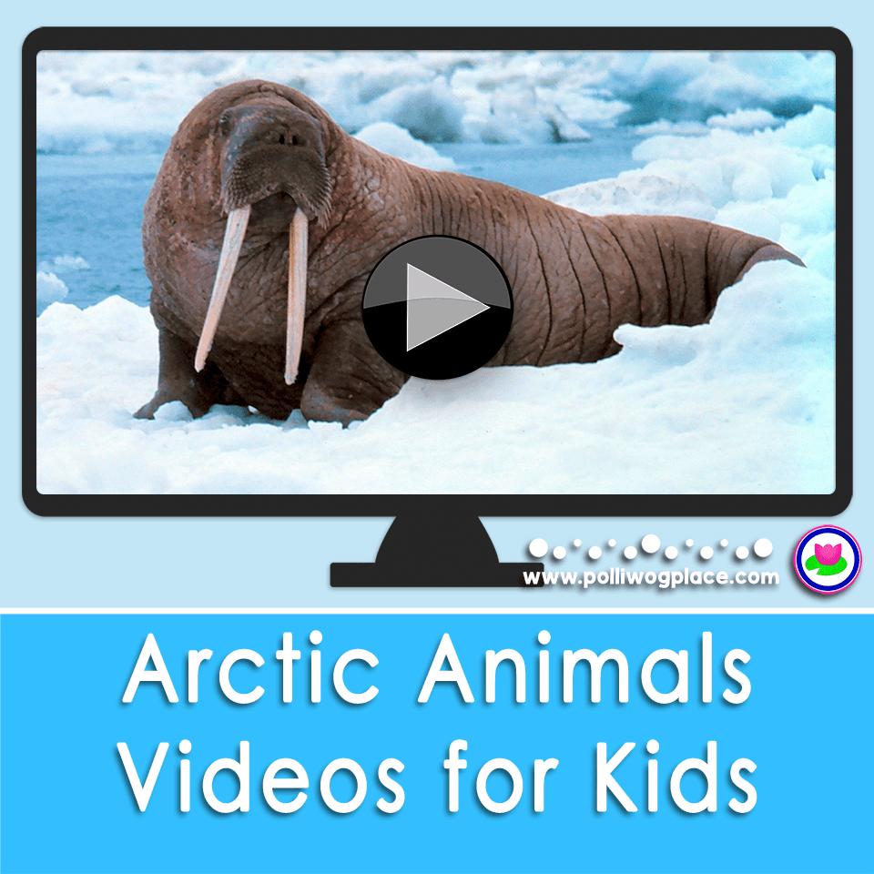 Arctic Animal Videos for Kids